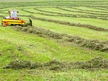 Agricoltore sul suo trattore che muove l'erba per renderlo asciutta a Engelberg sulle alpi svizzere Fotografia Stock Libera da Diritti