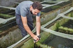 Agricoltore sull'azienda agricola della rana in Bali Immagine Stock Libera da Diritti