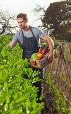 Agricoltore sull'azienda agricola organica sostenibile locale Fotografia Stock Libera da Diritti