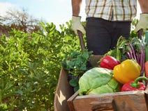 Agricoltore sull'azienda agricola organica sostenibile locale Immagine Stock Libera da Diritti