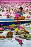 Agricoltore sulla barca blu che raccoglie loto rosa beuatiful Immagini Stock