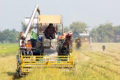 Agricoltore sulla mietitrebbiatrice al giacimento del riso Immagine Stock