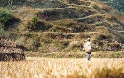 Agricoltore sulle risaie sul viaggio del campo base di Annapurna, Nepal Immagine Stock