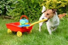 Agricoltore sveglio con la carriola del giocattolo che funziona al giardino del cortile Immagine Stock Libera da Diritti