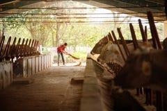 Agricoltore Sweeping Stables People dell'azienda agricola di pulizia dell'uomo in ranch Fotografie Stock