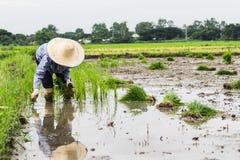 Agricoltore tailandese Immagini Stock Libere da Diritti