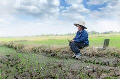 Agricoltore tailandese asiatico che utilizza smartphone e computer portatile nel ri Immagini Stock Libere da Diritti