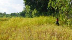 Agricoltore tailandese che lavora in riso archivato Immagine Stock