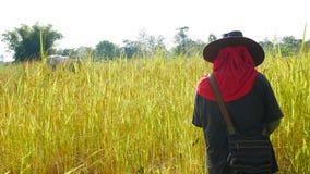 Agricoltore tailandese che lavora in riso archivato Fotografia Stock Libera da Diritti
