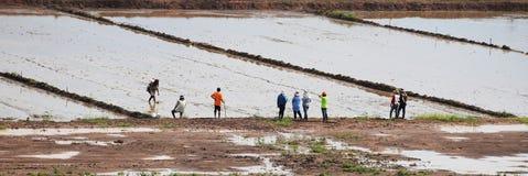Agricoltore tailandese che prepara terra per il semenzaio Giacimento del riso con acqua Modello in natura Fotografia Stock Libera da Diritti