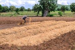 Agricoltore tailandese che ricopre piantagione di pacciame con paglia Fotografia Stock