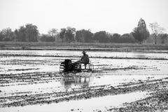 Agricoltore tailandese che utilizza il trattore dell'attrezzo nel giacimento del riso Immagine Stock