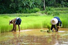 Agricoltore tailandese Family Working nell'agricoltura Immagine Stock Libera da Diritti