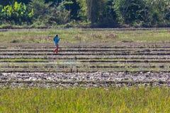 Agricoltore tailandese nel campo Fotografia Stock Libera da Diritti