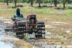Agricoltore tailandese sul piccolo trattore nell'azienda agricola del riso Immagini Stock Libere da Diritti
