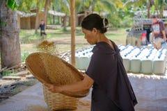Agricoltore tailandese tradizionale con la preparazione del riso prima della cottura Immagini Stock Libere da Diritti