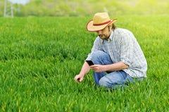 Agricoltore Taking Photo di giovane campo di coltivazione del grano Immagini Stock