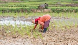 Agricoltore Thailand Fotografia Stock Libera da Diritti