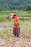 Agricoltore Thailand Fotografia Stock