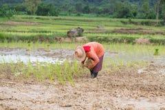 Agricoltore Thailand Immagine Stock Libera da Diritti