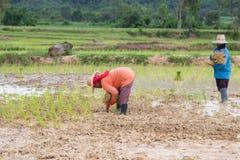 Agricoltore Thailand Fotografie Stock Libere da Diritti