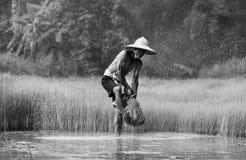 Agricoltore Thailand Immagini Stock