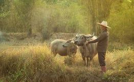 Agricoltore Thailand con la Buffalo Immagini Stock