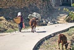 Agricoltore tibetano nelle montagne della Cina Fotografia Stock Libera da Diritti