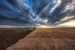 Agricoltore in trattore che prepara terra con il coltivatore Fotografia Stock Libera da Diritti