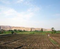 Agricoltore in un campo Immagini Stock Libere da Diritti