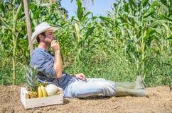 Agricoltore in un campo Immagini Stock