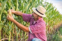 Agricoltore in un campo Fotografia Stock