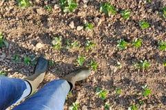 Agricoltore in un campo Fotografie Stock Libere da Diritti