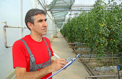 Agricoltore in una serra Immagine Stock