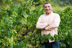 Agricoltore vicino all'uva in vigna Fotografie Stock Libere da Diritti