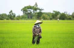 Agricoltore vietnamita Fotografie Stock