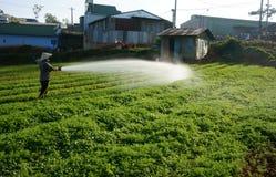 Agricoltore vietnamita che innaffia sul campo di verdure Fotografia Stock