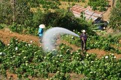 Agricoltore vietnamita che lavora al giardino floreale Fotografie Stock Libere da Diritti