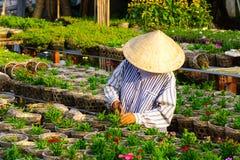Agricoltore vietnamita che lavora al giardino floreale Immagini Stock Libere da Diritti
