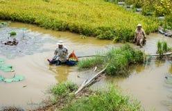 Agricoltore vietnamita che lavora al riso Fotografia Stock