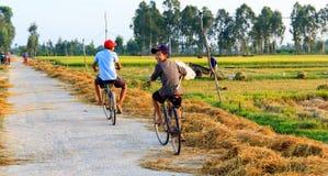Agricoltore vietnamita che lavora nelle risaie Immagine Stock Libera da Diritti