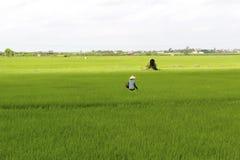 Agricoltore vietnamita che pianta riso nel campo Immagini Stock Libere da Diritti