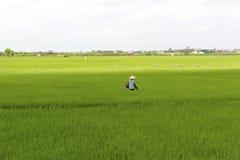 Agricoltore vietnamita che pianta riso nel campo Fotografie Stock
