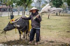 Agricoltore vietnamita con il bufalo in Ninh Binh Immagini Stock