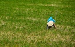 Agricoltore vietnamita del riso Fotografie Stock
