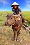Agricoltore vietnamita ed il suo bufalo d'acqua Fotografia Stock