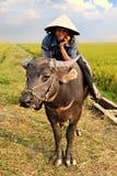 Agricoltore vietnamita ed il suo bufalo d'acqua Fotografia Stock Libera da Diritti