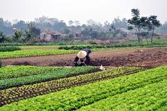 Agricoltore vietnamita nel campo fotografia stock