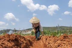 Agricoltore vietnamita sul campo Fotografia Stock