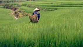 Agricoltore vietnamita sul giacimento del riso in valle di PA del Sa Immagine Stock Libera da Diritti